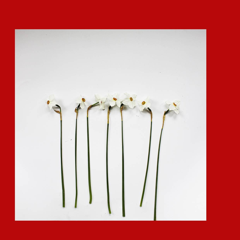Без назви-1квіти